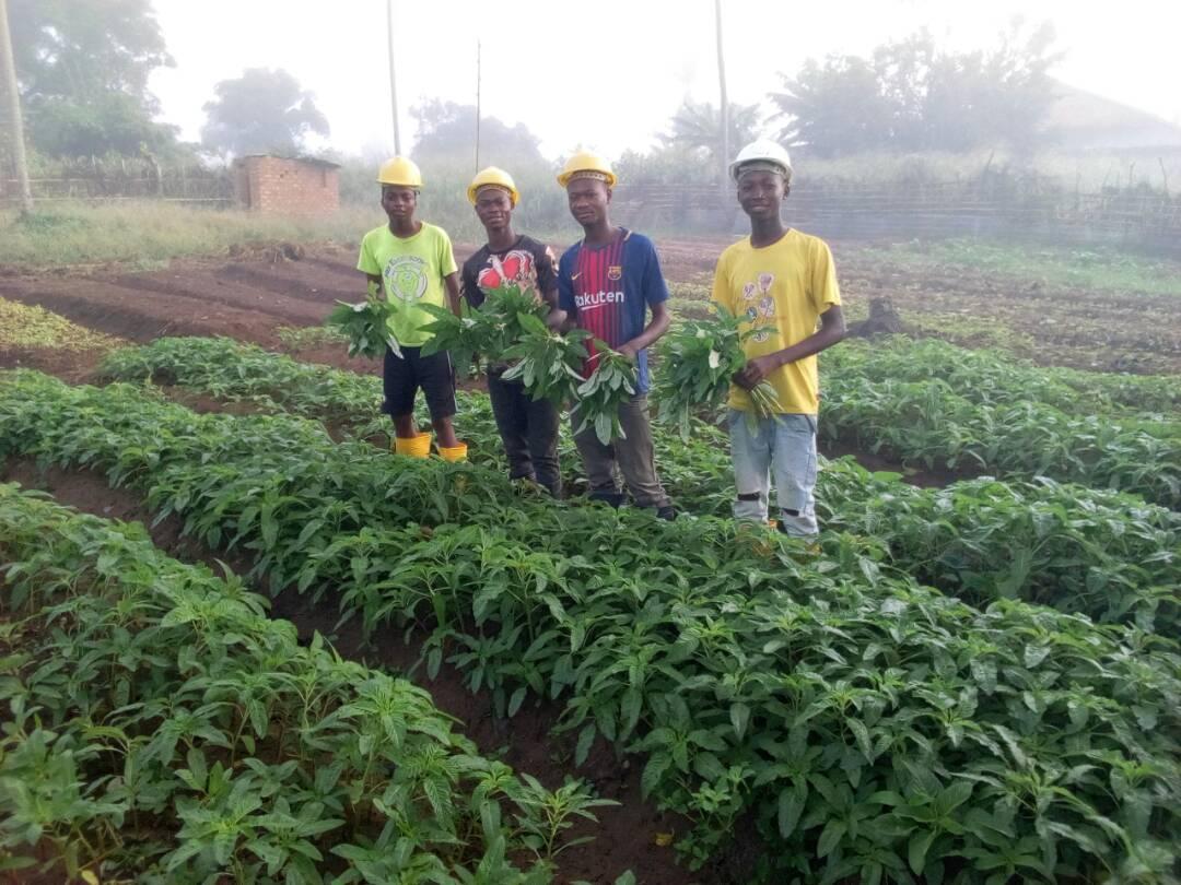 Update on Farm to Market Project at NdjokoPunda